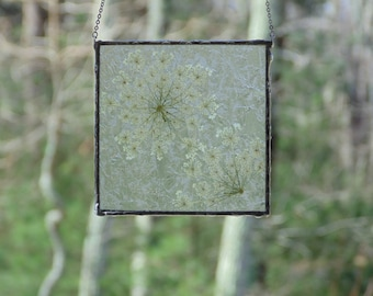 Pressed flower wall hanging, stained glass botanical wild flower art, Queen Anne's Lace