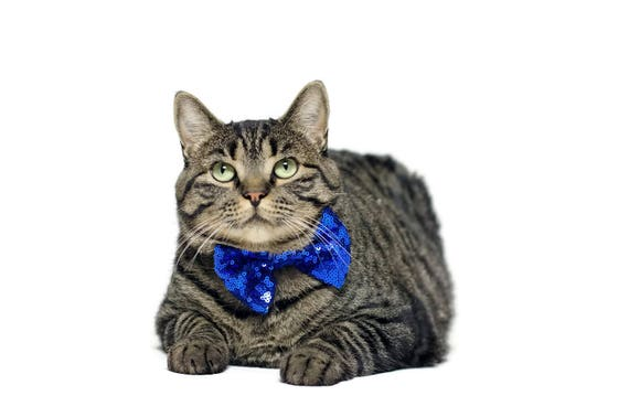 Cat Bow Tie || Bowtie for Kitty || Pet Bow Tie || Cat Costume
