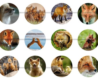 Fox Magnets Pins Wildlife Foxes Party Favors Gift Sets