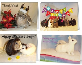 Pack of 4 Greeting Cards.