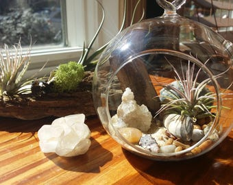 Enchanted Air Plant Hanging Globe Beach Terrarium | Air Plant Crystal | Tillandsia | Beach Decor | Crystal Garden | Friend Gift
