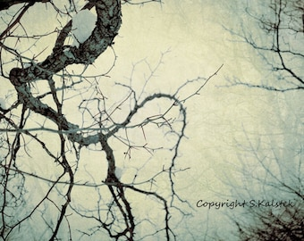 Tree Photograph Ethereal Winding Tree Branches Misty Light  Pale Teal and Brown Wall Art 12x8