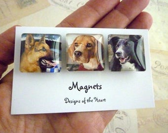 Magnets Square Glass set - Australian Stamp Collection - Dogs