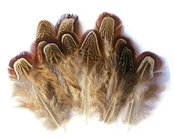 Pheasant feathers x 10
