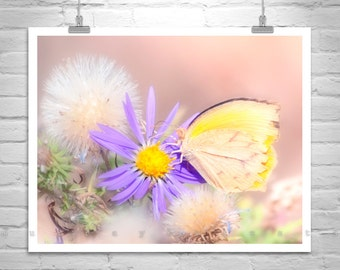 Butterfly Photograph, Yellow Dandelion, Butterfly Art, Butterfly Picture, Yellow Butterfly, Insect Art, Nature Photography, Butterfly Gift