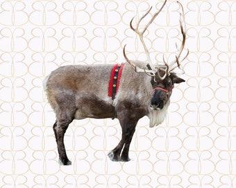 Regal Reindeer Overlay + Bonus Christmas Tree Farm Background!