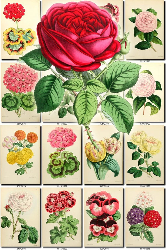 FLOWERS-1 collection of 228 vintage images vegetable botanical ...
