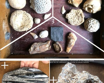 Choice of 3 kits + 1 plated XXL 1.10 pounds orthoceras fossil Collections *.