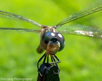 Close-up photograph of dragonfly