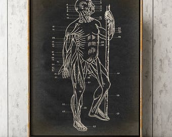 HUMAN BODY ANATOMY Poster, Muscles Chart, Scientific Illustration, Anatomical Drawing, Anatomy Print, Medical Art, Doctor, Surgery Art