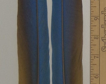 Matched Pair BLUE & GOLD Macaw Parrot Tail Feathers 12 to 24 inches GORGEOUS!