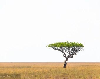 "Photo Print: ""Persistence"" - Acacia Tree, Serengeti National Park, Tanzania"