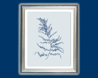 Sea fan art, Sea blue seaweed, Seaweed poster, Alga print, Nautical art, Beach house decor, Nursery art, Bathroom decor, Instant download.