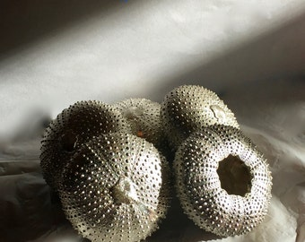 Bounty of the Sea - Solid Sterling Silver Sea Urchins