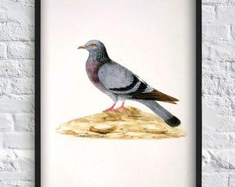 Dove print bird print bird illustration vintage art print painting print bird poster home decor wall art decor city bird grey poster