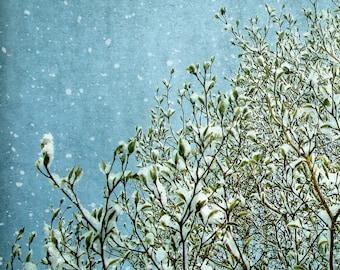 Magnolie Schnee