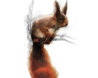Red squirrel sketch | Limited edition fine art print from original drawing. Free shipping.