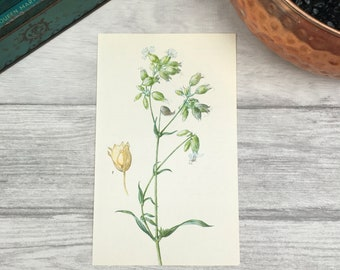 Botanical art print vintage print Farmhouse decor floral prints botanical drawing nature artwork modern art print contemporary art plant