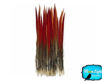 "Pheasant feathers, 10 Pieces- 8-10"" Golden Pheasant Red Tips Loose Feathers : 3658"