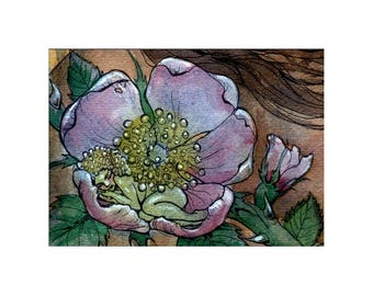 Rose Faery - Limited Edition ACEO print