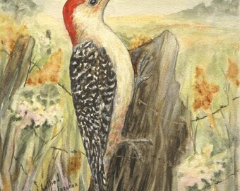 Red-bellied Woodpecker print 5 x 7 inches.