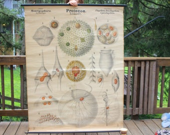 Antique 19th Century Biology Poster/Chart, Flagellates, Leuckart, Nitsche, Educational Biology Poster, Protozoa, Protists, Microbiology