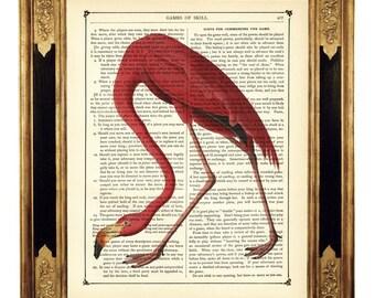 Pink Flamingo Dictionary Art Print Bird Poster Natural History - Vintage Victorian Book Page Art Print Steampunk