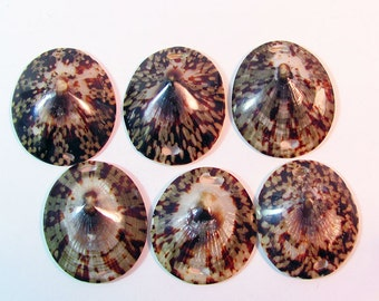 Domed Limpet Seashell Pendants Bracelet Findings 6