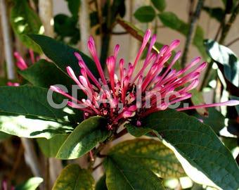 Florida Flower Digital Download