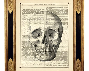 Human Skull Image Head Gothic Halloween Anatomy Poster - Vintage Victorian Book Page Art Print Steampunk