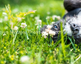 Flower Field Dog eyes Profile Portrait Print, Fine Art Photography Print, Purrfect Pawtrait Pet Photography, Animal Photography