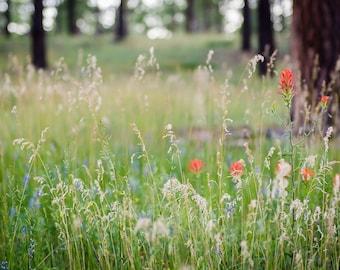 Flower in the Woods - Flagstaff, AZ