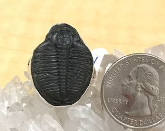 Fossil Trilobite Stone Ring Size 11