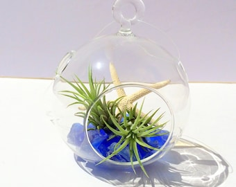 Air Plant Hanging Glass Orb Garden Beach Theme with sea glass and starfish