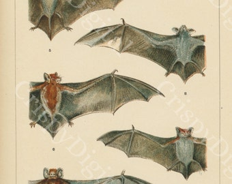 Bats Digital Paper Printable Vintage Wall Art Bat Print Bats Antique Print