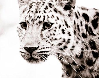 Leopard Wall Art, Fine Art Sepia Photograph, Animal Photography - Monochrome Home Decor Photos 11x14