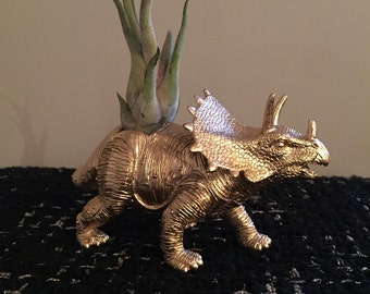 Gold triceratops dinosaur planter with air plant; dino planter; air plant holder