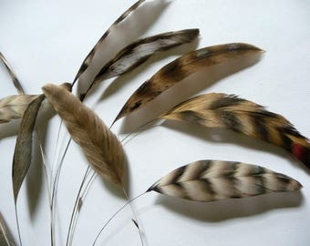 Barred Brown Stripped Coque Feathers Chinchilla Trimmed Millinery for Hats Fascinators Crafts Masks Costumes