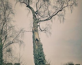Chinese Watercolour Tree
