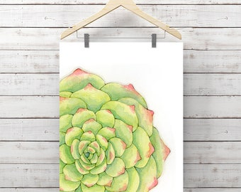 Succulent Watercolor Print - Succulent Painting - Original Watercolor Art by Angela Weber