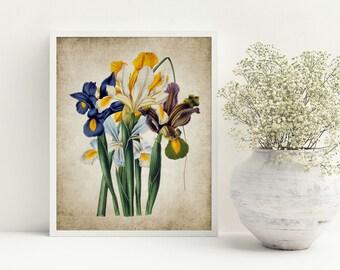 Iris Print - Iris Plant Illustration - Iris Art - Vintage Botanical - Digital Art - Printable Art - Single Print #47 - INSTANT DOWNLOAD