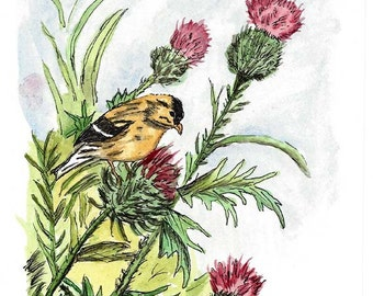 Original Pen and Ink Drawing with Watercolor Wash - Yellow Finch Perched on Thistle Plant