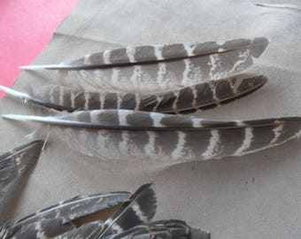 """3 """"Eagles"""" wings Colchis, good quality pheasant feathers!"""