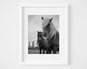 Country photos - Fine art farm photograph - Icelandic horse print - Black and white photography - Baby nursery art - Photo gift mom - Hygge