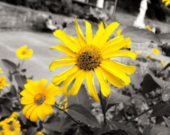Photograph: Yellow Flowers Nature Photo 5x7 Print