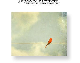 Cardinal Photograph, Bird on a Wire Art, Cardinal on a Wire, Cardinal Silhouette in Cloudy Sky, Cardinal Photo Decor, Nature Red Bird Print