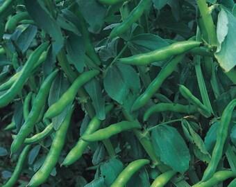 Broad Bean Aquadulce  Fava bean 30 seeds  Vegetable