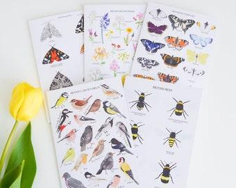 British Nature Card Set - Greetings Card Set - Birds Card - Moths Card - Wildflowers Card - Butterflies Card - Bees Card - Card Pack