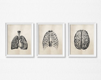 Human Anatomy Wall Art - Set of three - PRINTABLE Art - Vintage Medical Science Art - Office Decor - Medical student - Light Brown