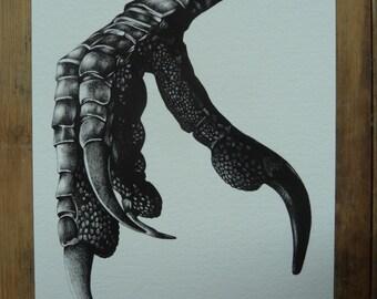 Crow Claw 5 x 8 giclee art print, A5 print, black and white illustration, biro drawing, bird print, wall art
